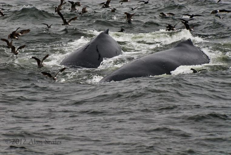 pair romping thru krill